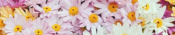 Çiçekler ile gelen tebessüm