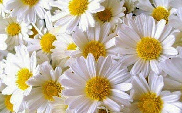 ilkbahar yaz çiçekleri