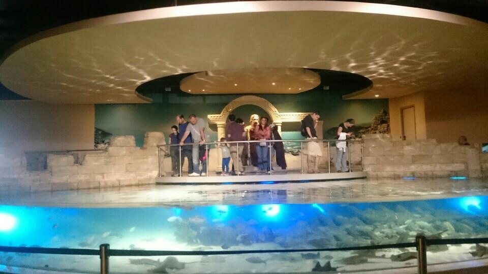 istanbul akvaryumdan bir görüntü