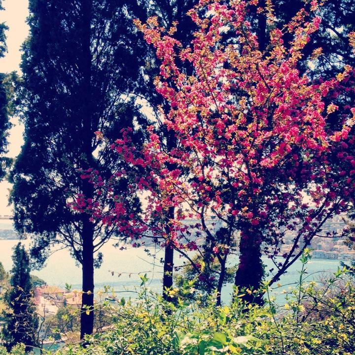 mihribat korusu huzur veren ağaç